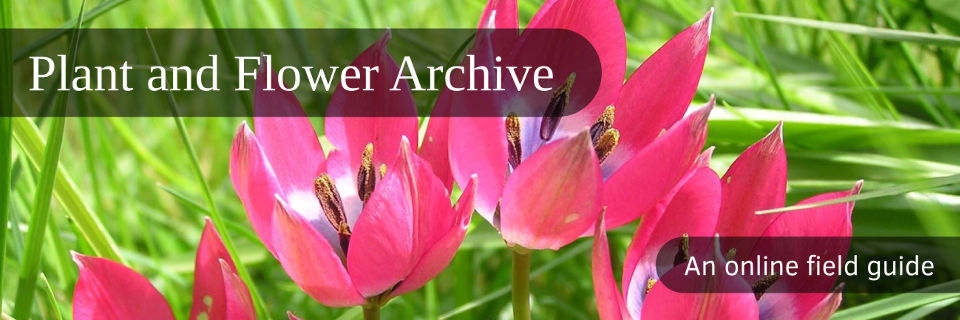 Plant and Flower Archive: An online field guide for species identification